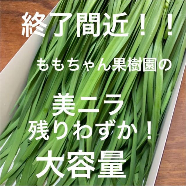 新鮮野菜 無農薬 ハウス栽培の美ニラ 即購入可能!終了間近!急いで 食品/飲料/酒の食品(野菜)の商品写真