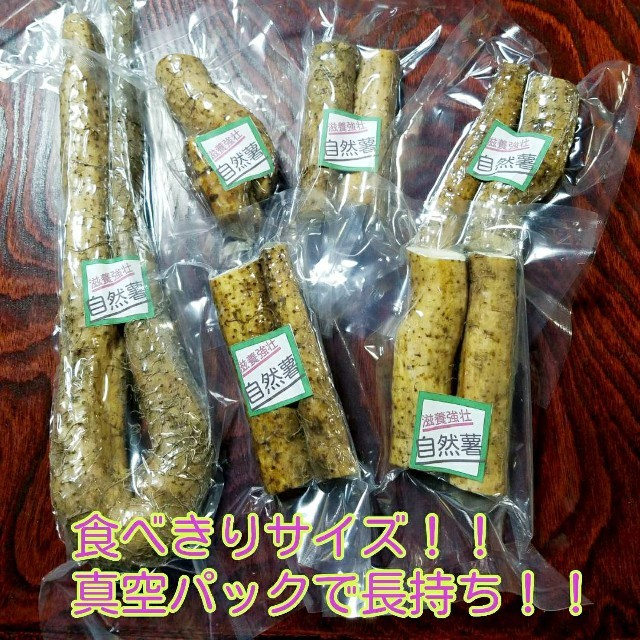 送料込み!お試し自然薯! 食品/飲料/酒の食品(野菜)の商品写真
