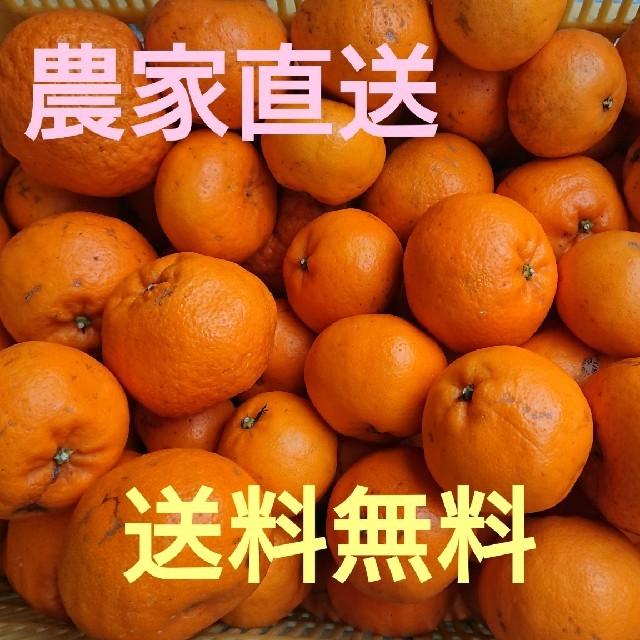 愛媛県産はるみ5㎏訳ありお買い得 食品/飲料/酒の食品(フルーツ)の商品写真