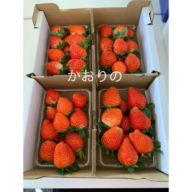 三重県産いちご8パック 食品/飲料/酒の食品(フルーツ)の商品写真