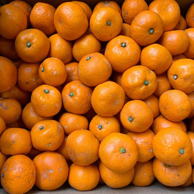 あまちゃんこみかん 10キロ 送料無料 食品/飲料/酒の食品(フルーツ)の商品写真