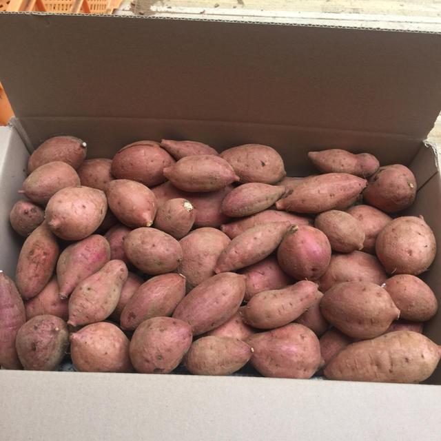 無農薬‼️安納紅5キロ種子島産‼️ 食品/飲料/酒の食品(野菜)の商品写真