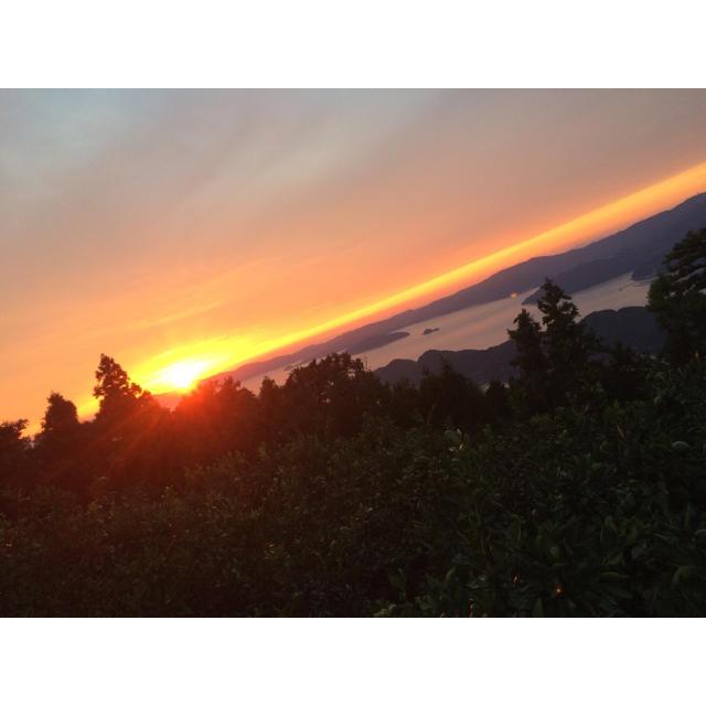 高級柑橘デコポン 夕やけブランド 愛媛県産 お試しセット 食品/飲料/酒の食品(フルーツ)の商品写真