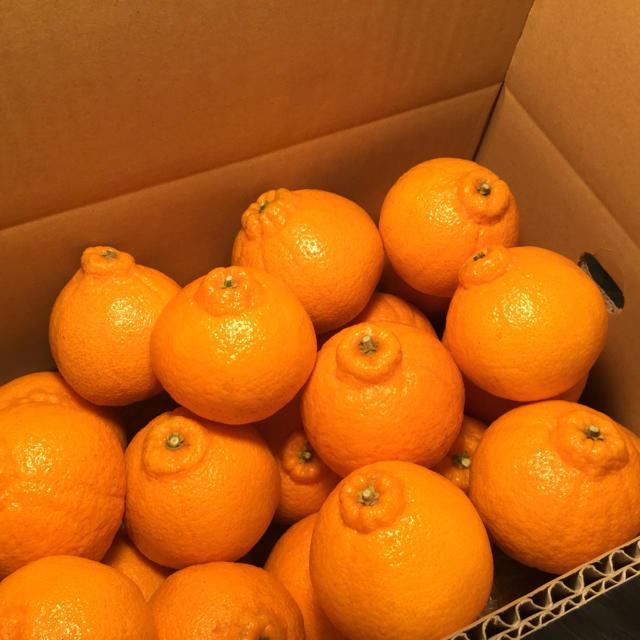 高級柑橘デコポン 夕やけブランド 愛媛県産 L〜LL玉 5kg 食品/飲料/酒の食品(フルーツ)の商品写真