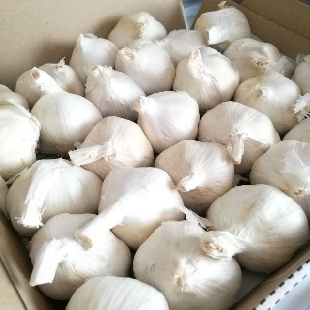 《ノーブランド》にんにく900g 食品/飲料/酒の食品(野菜)の商品写真