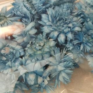 ヘリクリサム ヘッド ブルー 1袋(ドライフラワー)
