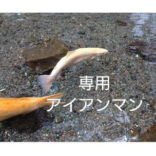 アイアンマン1000円(アメコミ)