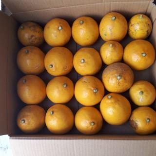 限定1箱 国産無農薬 マイヤーレモン 2.8kg 送料無料 サイズ混合(フルーツ)