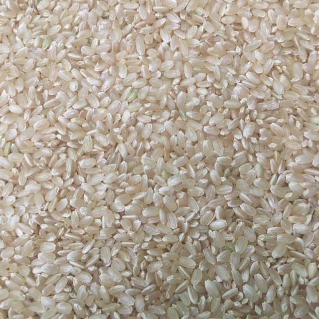 コシヒカリ玄米10キロ 食品/飲料/酒の食品(米/穀物)の商品写真