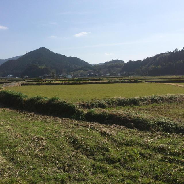 【自宅へお届け】朝倉市 秋月 綺麗な水と空気で育った【お米】(夢つくし) 食品/飲料/酒の食品(米/穀物)の商品写真