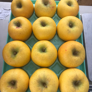 【送料込】葉とらずりんご シナノゴールド 33〜39個 約10kg (フルーツ)