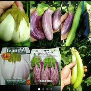 イタリア野菜の4種子  ゼブラナス、白大玉ナス、青長ナス 、おまけタマゴなす(野菜)