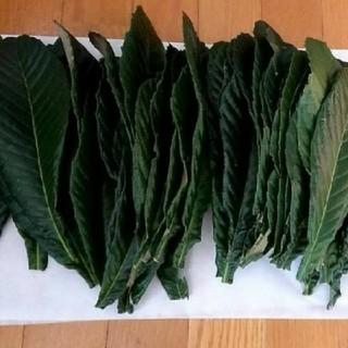 枇杷の葉(茶)
