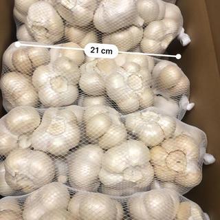青森県産福地ホワイトにんにく2キロLサイズ送料無料(野菜)