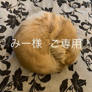 みー様  ご専用(リード/首輪)