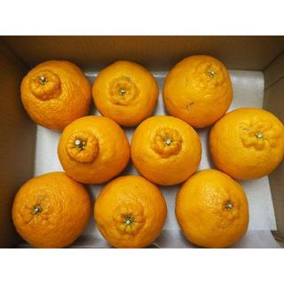 熊本県産 不知火オレンジ(デコポン) 2.5K 送料込み♪(フルーツ)