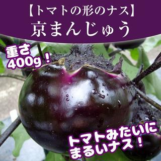 【トマトみたいなナス!?】京まんじゅうナスの種10粒(野菜)