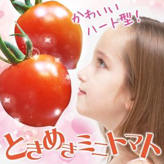 【ハート型】ときめきミニトマトの種10粒(野菜)