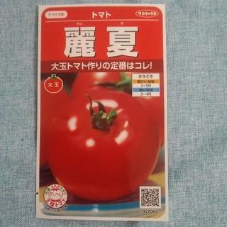 【10粒】麗夏 トマトの種★大玉トマト 種子 野菜の種 サカタのタネ(野菜)