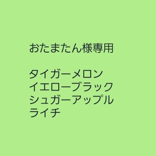 おたまたん様専用【イエローブラック】種子20粒 チェリートマト(その他)