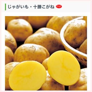 ★1名様限定★じゃがいもの種芋「十勝こがね」3個セット(野菜)