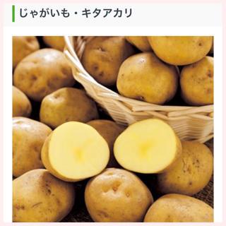 ★1名様限定★じゃがいもの種芋「キタアカリ」3個セット(野菜)