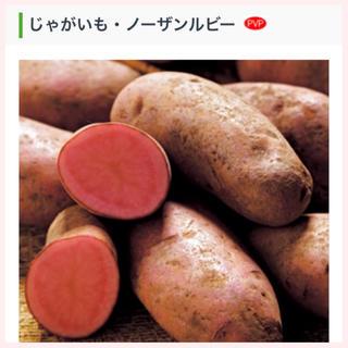 ★1名様限定★じゃがいもの種芋「ノーザンルビー」3個セット(野菜)