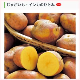★1名様限定★じゃがいもの種芋「インカのひとみ」3個セット(野菜)