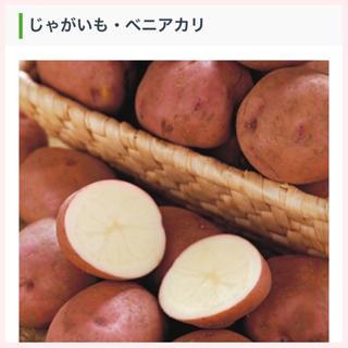 ★1名様限定★じゃがいもの種芋「ベニアカリ」3個セット(野菜)