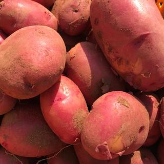 じゃがいも レッドムーン 長崎県産5kg  有機栽培(野菜)