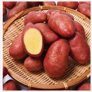 ★1名様限定★じゃがいもの種芋「タワラヨーデル」3個セット(野菜)