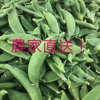 スナップえんどう 1kg 鹿児島県産(野菜)