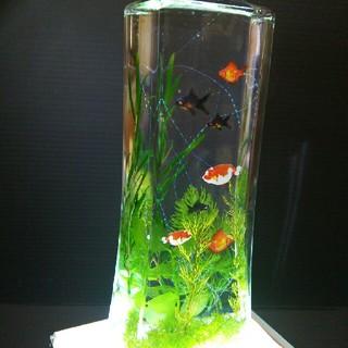 ハーバリウム    金魚鉢バージョン(プリザーブドフラワー)