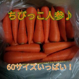 ちびっこ人参☆60サイズいっぱい♪(野菜)