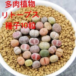多肉植物リトープス種子10粒(その他)