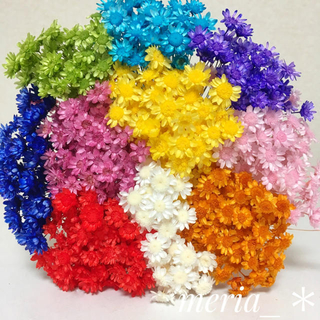 スターフラワー ブロッサム 100本 大地農園 ハーバリウムボールペン 春 花材(プリザーブドフラワー)