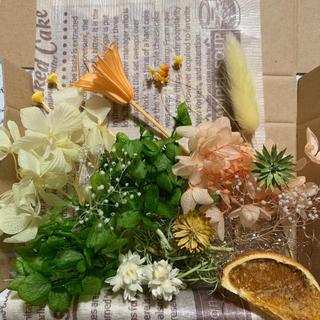 ハーバリウム花材オレンジお試しセットNo.118-157(プリザーブドフラワー)