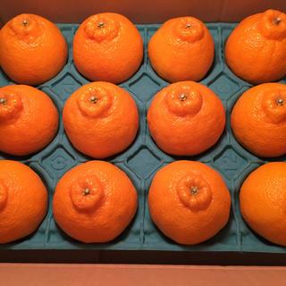 高級柑橘デコポン 夕やけブランド 愛媛県産 お試しセット(フルーツ)