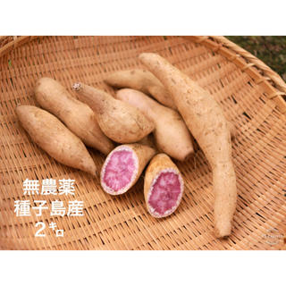 無農薬種子島産 紫イモ 2キロ(野菜)