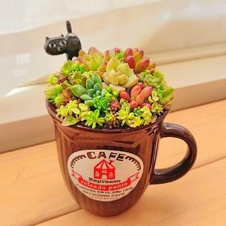◎みえっち様おまとめ◎ カップ寄せ 黒猫ピックつき(ФωФ)&フルーツリメ鉢(その他)