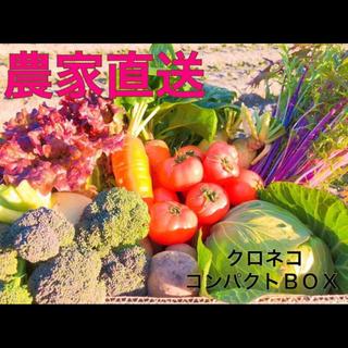 月曜日発送!新鮮野菜 野菜詰め合わせ 無農薬 低農薬 コンパクト(野菜)