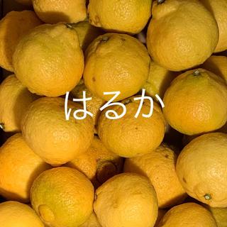 はるか  2.5キロ(フルーツ)