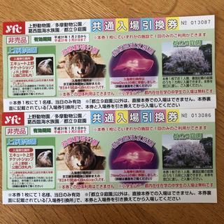 上野動物園    入場引換券  2枚組(動物園)