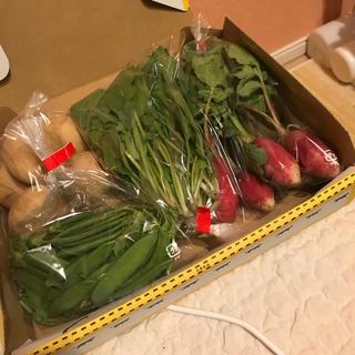 採れたて野菜3種と安芸津じゃがいもの詰め合わせ コンパクトBOX