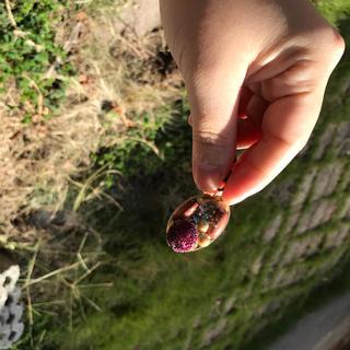 木苺candy風(スマホストラップ/チャーム)
