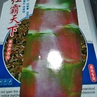 茎レタス種子(ステムレタス)50粒(野菜)