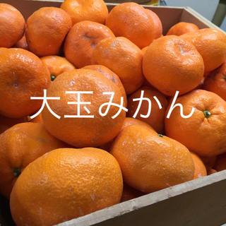 紀州 蔵出し みかん 大玉(フルーツ)