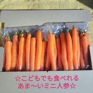 48 スティックミニ人参 無農薬(野菜)
