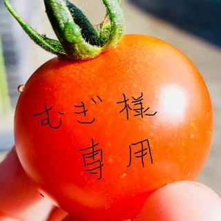 むぎ様専用ミニトマト1キロ(野菜)