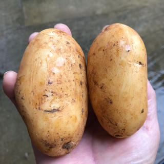 農家直送 じゃがいも アローワ10キロ無農薬栽培/赤土馬鈴薯/沖永良部島産(野菜)